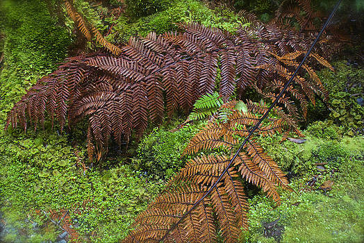Venetia Featherstone-Witty - Autumn Temperate Rainforest Ferns of New Zealand