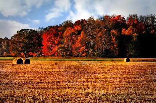Autumn Field by Cheryl Cencich