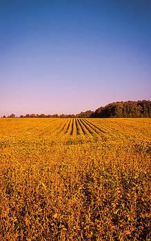 Autumn Field by Jon Gray