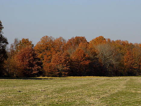 Autumn Field by Kay Sparks