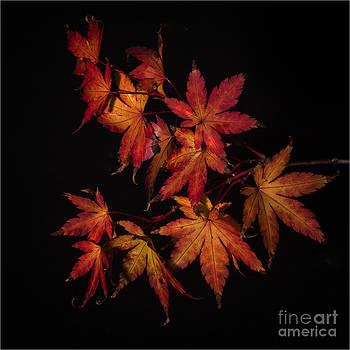 Nigel Jones - Autumn Fire