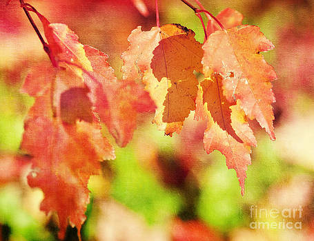 Autumn Fire by Pam  Holdsworth