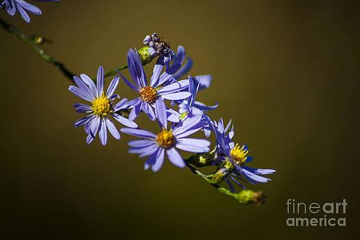 Wayne Moran - Autumn Floral