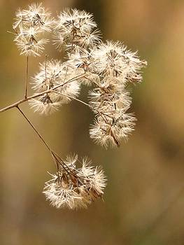 Autumn Fluff by Lori Frisch