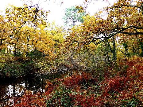 Bishopston Fine Art - Autumn Foliage