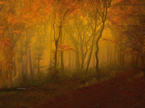 Autumn Forest in Misty Afternoon Light by Angela Stanton