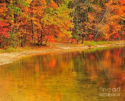Terri Gostola - Autumn Forest Reflection