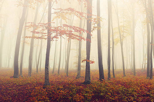 Autumn forest by Toma Bonciu