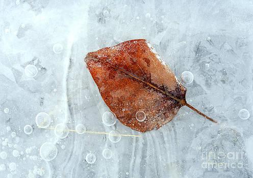 Mike  Dawson - Autumn Frozen