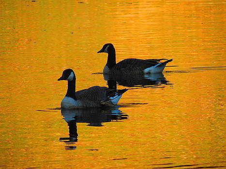 Autumn Geese by Alex  Call