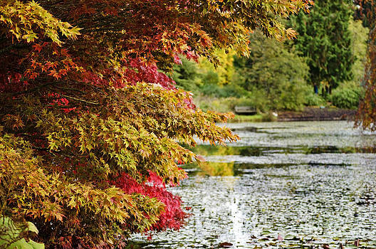 Autumn Glory by the Pond by Maria Janicki