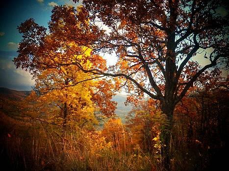 Autumn Glory by Joyce Kimble Smith