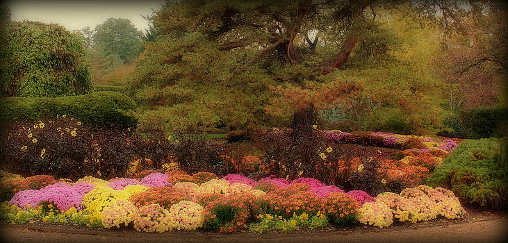 Rosanne Jordan - Autumn Glory