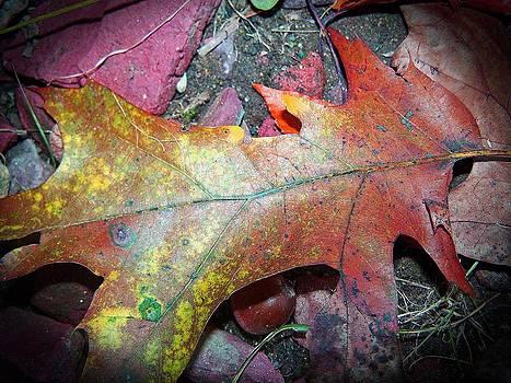Patricia Taylor - Autumn Glow