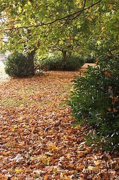 Autumns Gold 2 by Carol Lynch