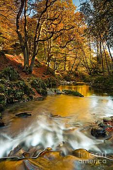 Autumn Gold by Derek Smyth