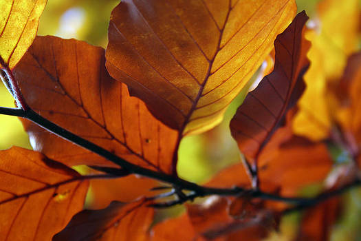 Autumn Gold by Jules Smith