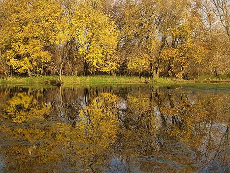 Autumn Gold Reflections by Lori Frisch
