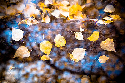 Autumn Gold by Roger Clifford