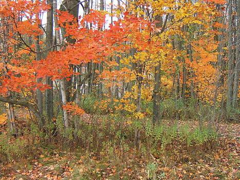Autumn Golds by Margaret McDermott