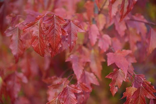 Autumn Harmony 2 by Teo SITCHET-KANDA