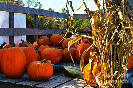 Autumn Harvest by Sharon L Stacy