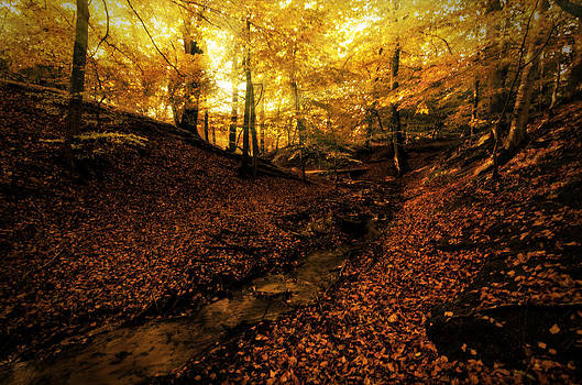 Autumn by Henrik Petersen
