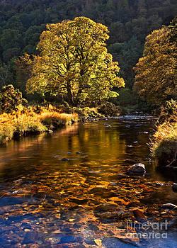 Autumn Highlights by Derek Smyth