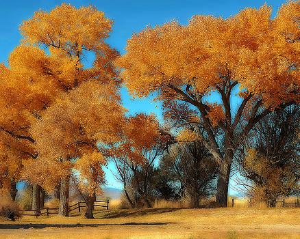 Autumn Honey Lake Valley by Marcie  Adams