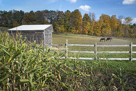Autumn Horses by Ray Summers Photography