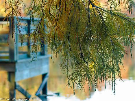 Autumn Hues by Kim Loftis
