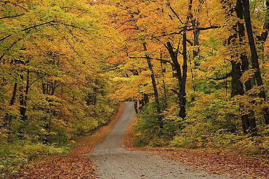 Gary Hall - Autumn In Algonquin 2