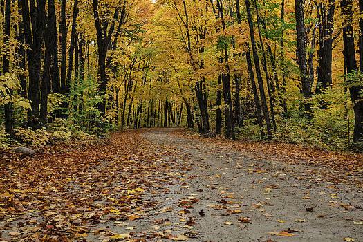 Gary Hall - Autumn in Algonquin