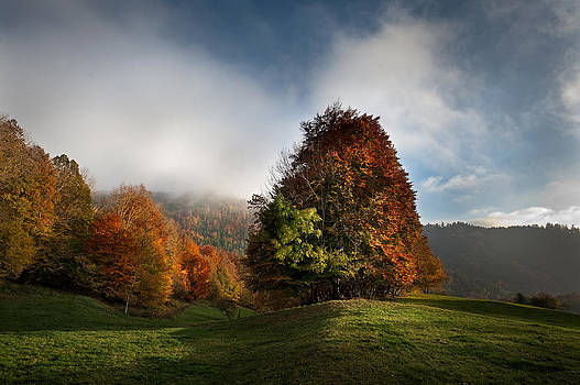Autumn in Alsace by Eric Bauer