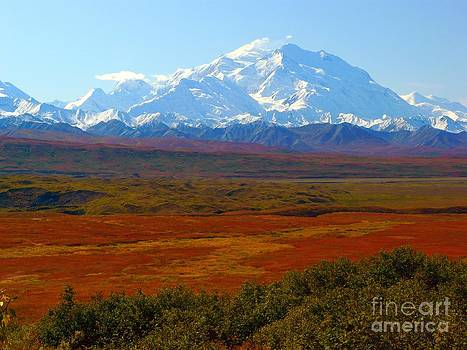 Christine Stack - Autumn in Denali