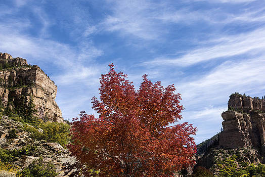 Brian Harig - Autumn In Glenwood Canyon - Colorado