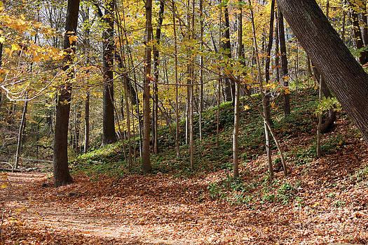 PJ Boylan - Autumn in Grant Park 4