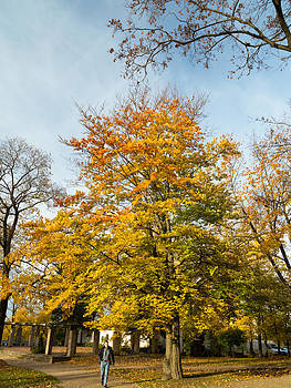 Autumn in Latvia by Pedro Nunez