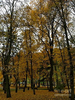 Autumn in October Vilnius Lithuania by Ty Cook