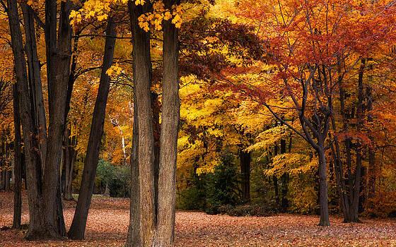 Autumn in Ontario by India Blue photos