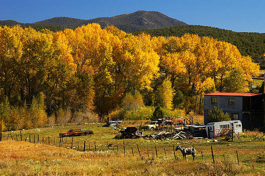 Autumn in Rural New Mexico by Shirin McArthur