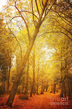 LHJB Photography - Autumn in the forest