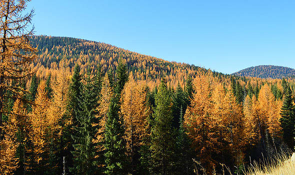 Autumn in the Kettle River Range by J Foster Fanning