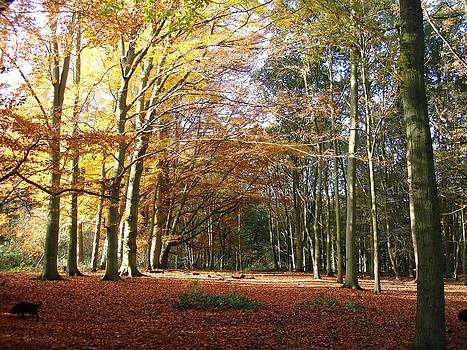 Autumn in Trent Country Park by Philip Francis