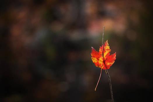 Autumn by India Blue photos
