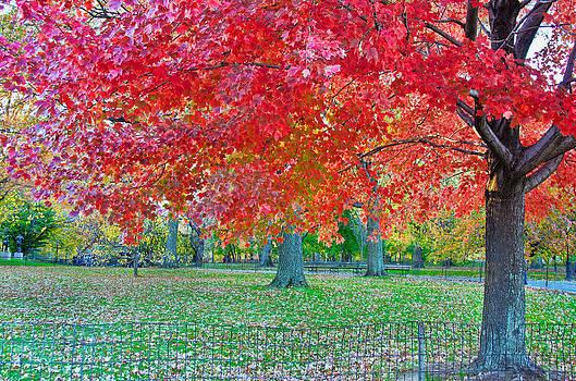 Barbara Manis - Autumn in Central Park