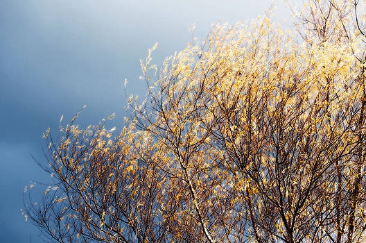 Autumn is Leaving by Gwyn Newcombe