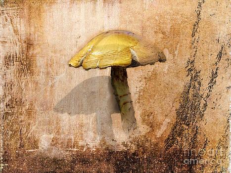 Autumn by Ivan Gomez