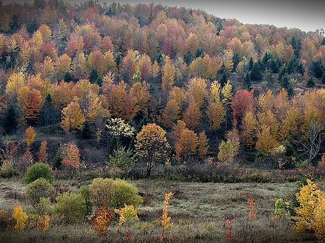 Autumn  by Jeanne LeMieux