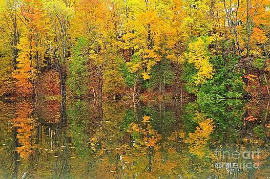 Terri Gostola - Autumn Kaleidoscope 10